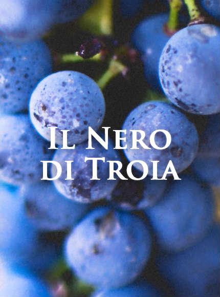 Nero di troia, vino nobile di puglia